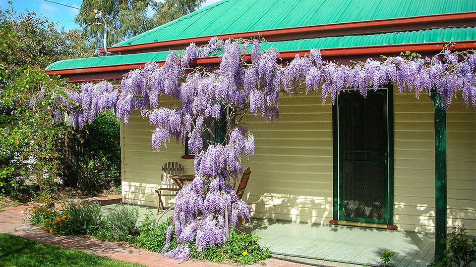 Ensuite Cottage Rooms - Triabunna Accommodation